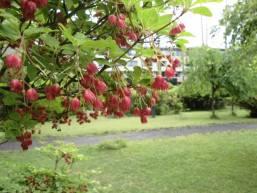 ホテル庭園の草花