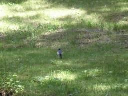 庭園に遊びに来た小鳥